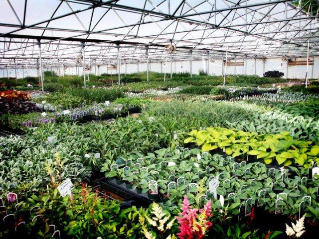 srg-greenhouse - Copy