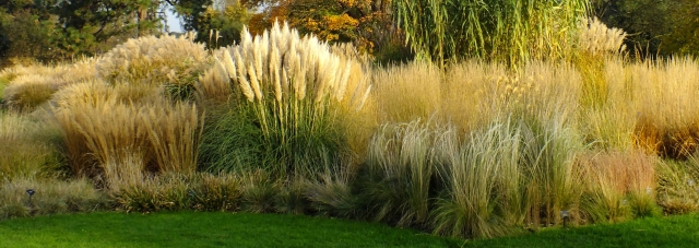 Petite power little grasses that could and do plumes and blooms ornamental grass garden workwithnaturefo